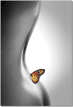 ✅ Wall Art Butterfly | VivaSalotti.com | pic1