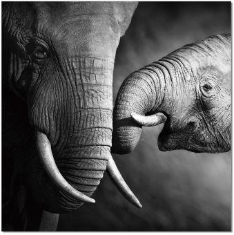 ✅ Wall Art Mama Elephant   VivaSalotti.com   pic1
